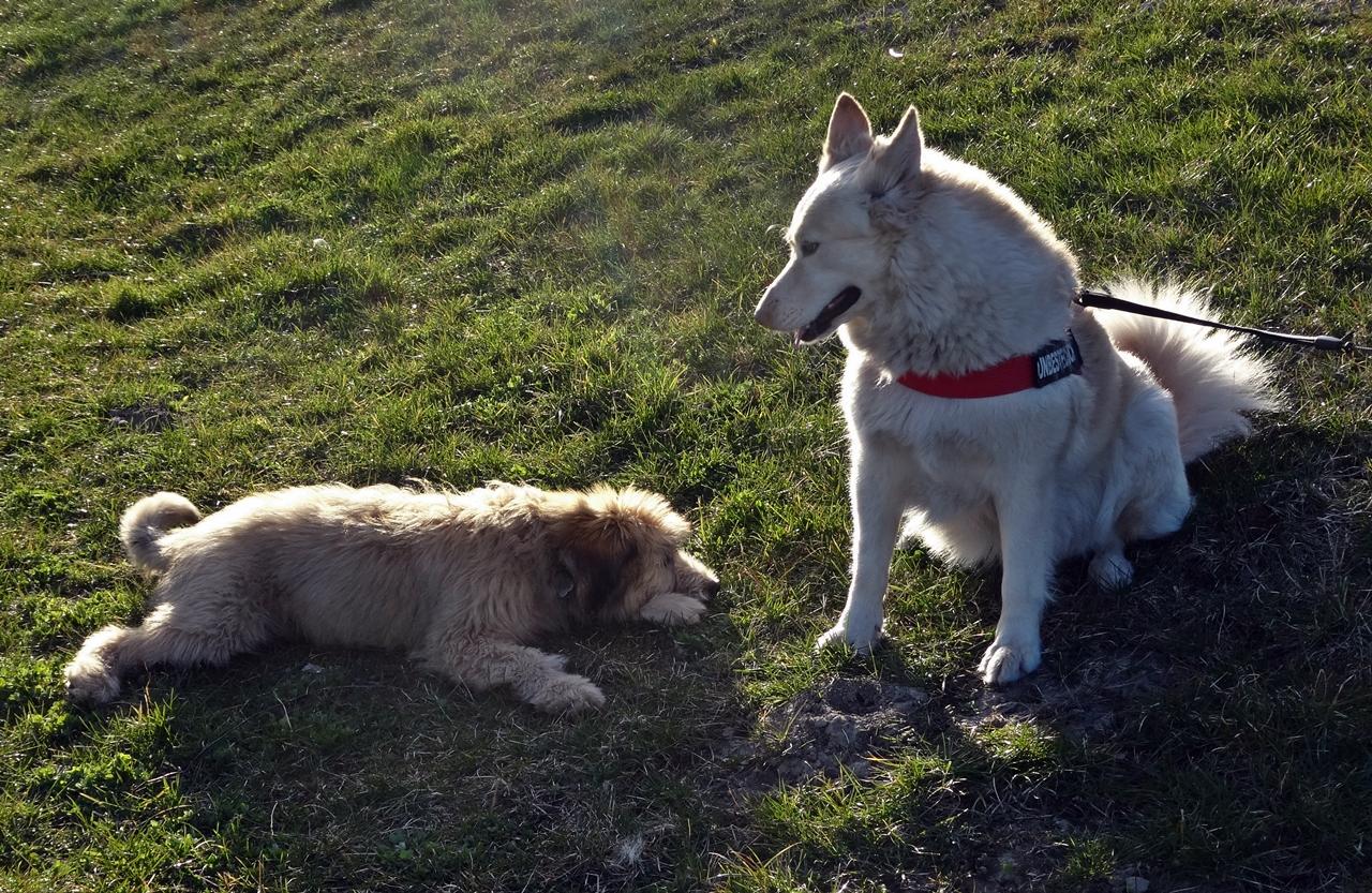 mit Schäferhund klein